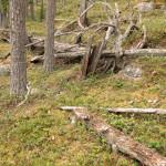 Tallnaturskog (2)