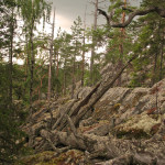 tallnaturskog  (3)