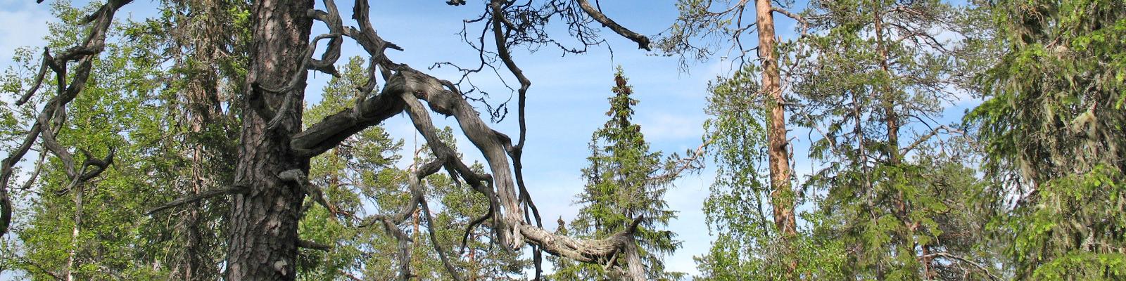 tallnaturskog  (4)