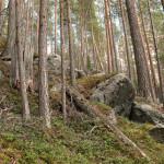 tallnaturskog (6)