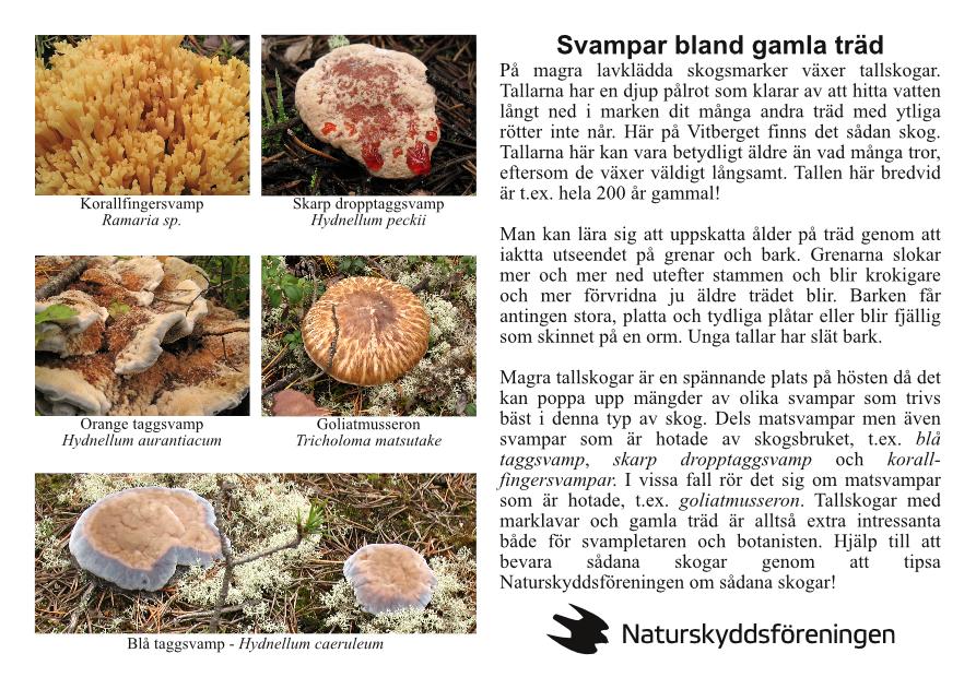 naturstig-svampar-bland-träd-page001