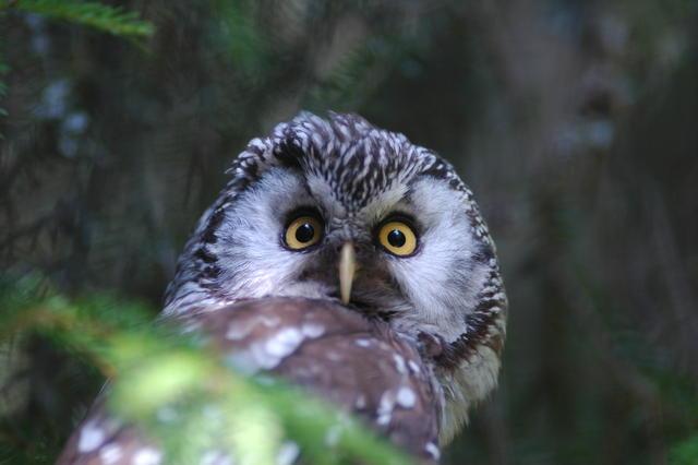 foto: Kjell-Åke Fredriksson @Naturfotobanken