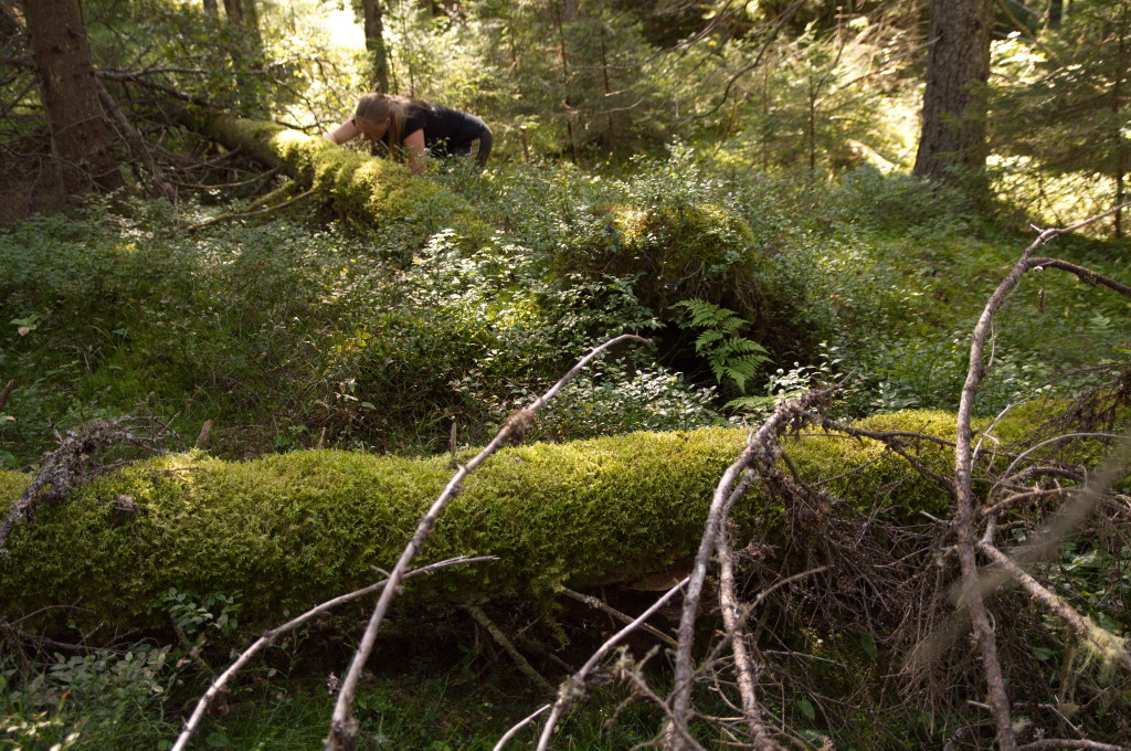 Lill undersöker lågor i grannaturskog